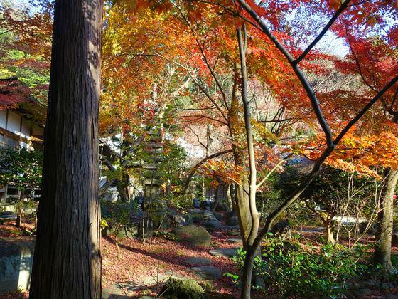 紅葉 覚園寺 鎌倉