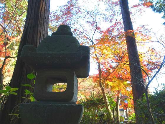 鎌倉 覚園寺 カエデ