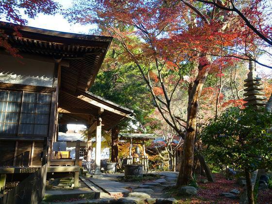 鎌倉 覚園寺 楓