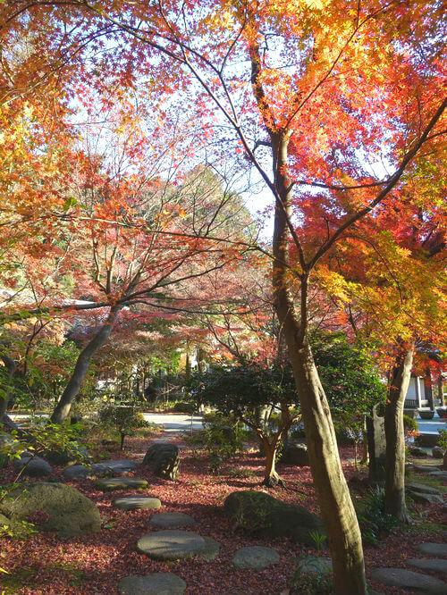 覚園寺 楓