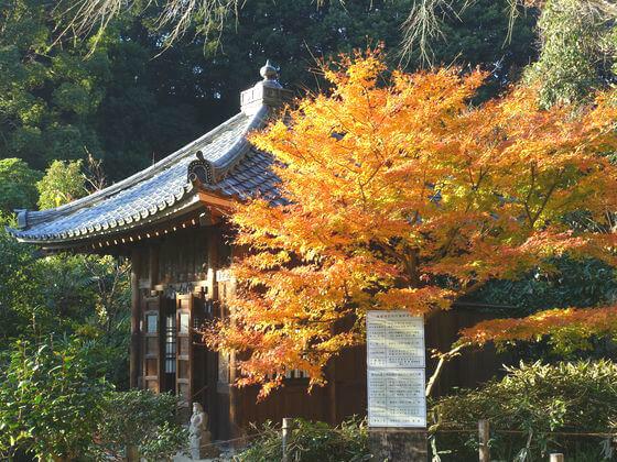 紅葉 鎌倉 瑞泉寺