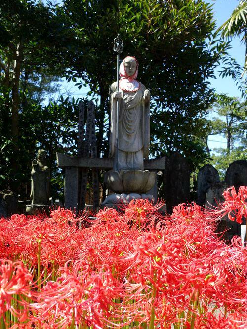葛飾区 宝蔵院 ヒガンバナ