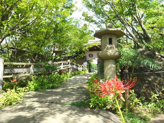 常泉寺 ヒガンバナ