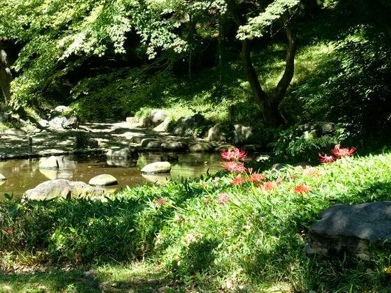 小石川後楽園 ヒガンバナ