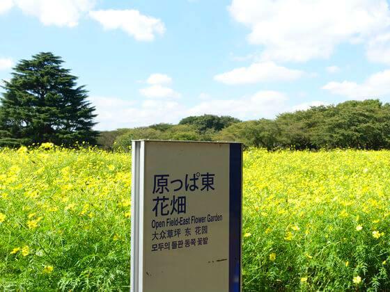 昭和記念公園 コスモス 場所