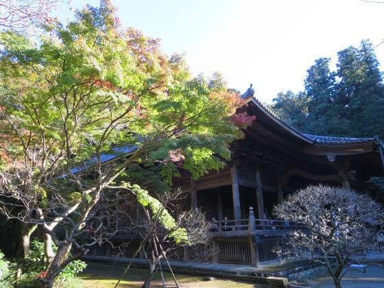 妙本寺 鎌倉 紅葉