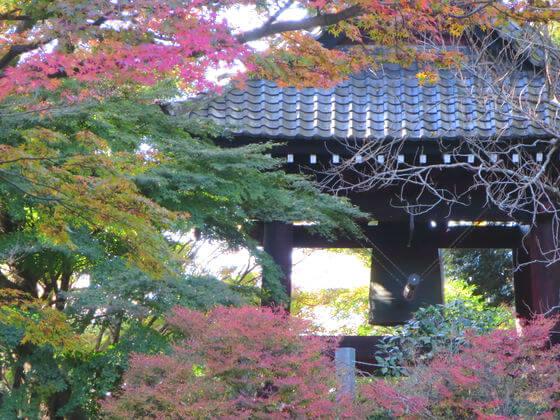 鎌倉 妙本寺 カエデ