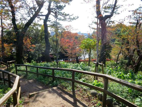 洗足池公園 桜山 紅葉