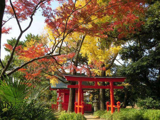 洗足池公園 紅葉