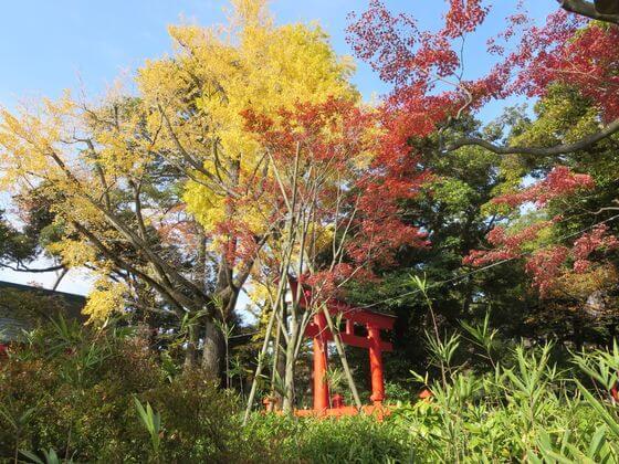 紅葉 洗足池公園
