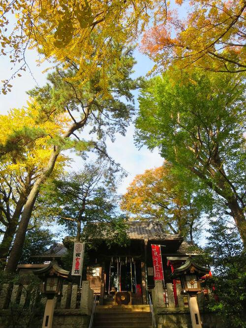 千束八幡神社 紅葉