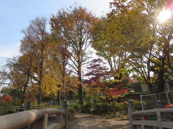 紅葉 洗足池