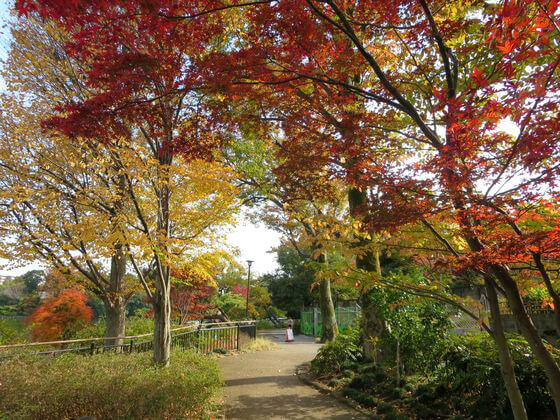 洗足池公園 紅葉 見頃