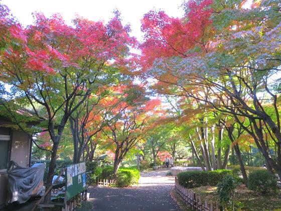 五反田 池田山公園 紅葉