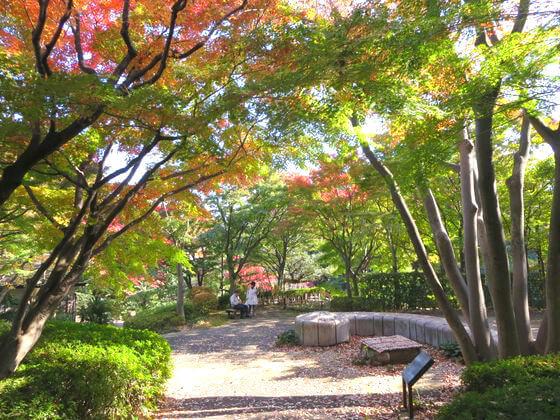 紅葉 池田山公園