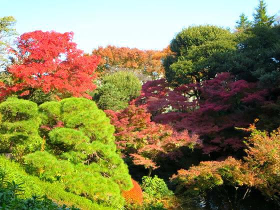 池田山公園 楓