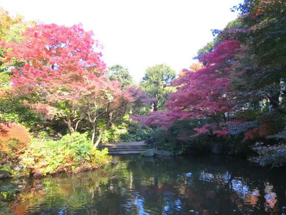池田山公園 紅葉