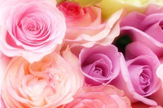 薔薇 種類