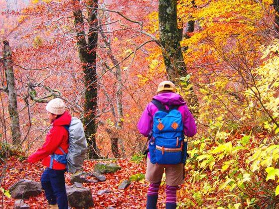 紅葉デート ハイキング