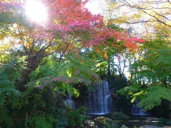 府中郷土の森 モミジの滝