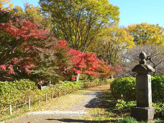 府中郷土の森博物館 紅葉 現在