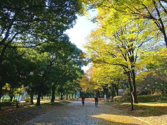 砧公園 ケヤキ並木