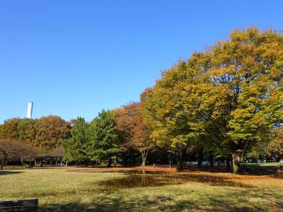 東京 砧公園 紅葉