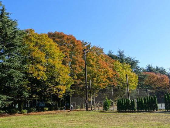 砧公園 紅葉
