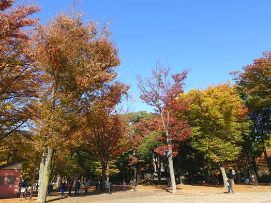 上野 紅葉 現在