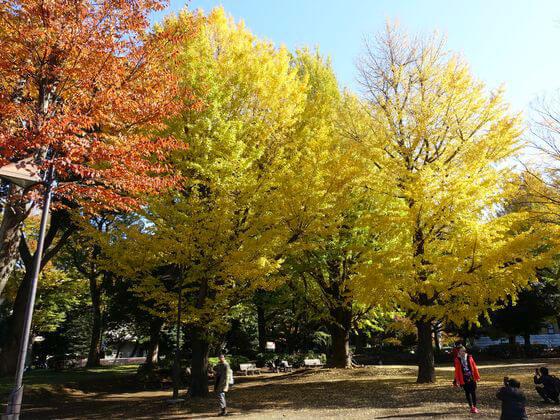 上野 銀杏