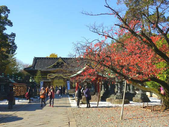 上野東照宮 紅葉