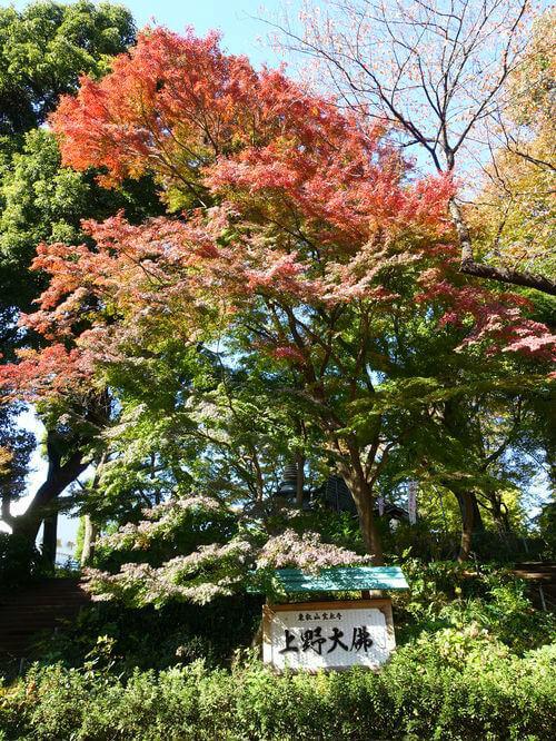 上野大仏 紅葉