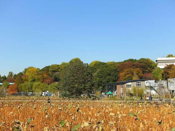 上野不忍池 紅葉