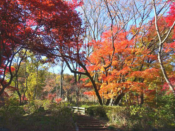 薬師池公園 紅葉 状況