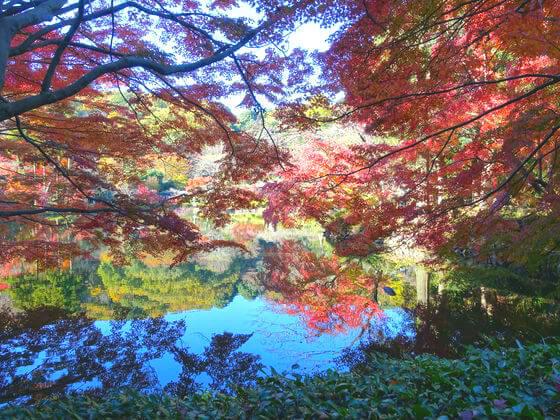 東京 薬師池公園