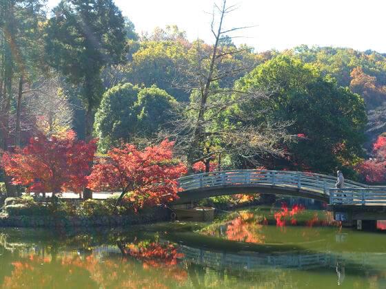 町田市 薬師池公園
