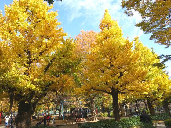 日比谷公園 銀杏