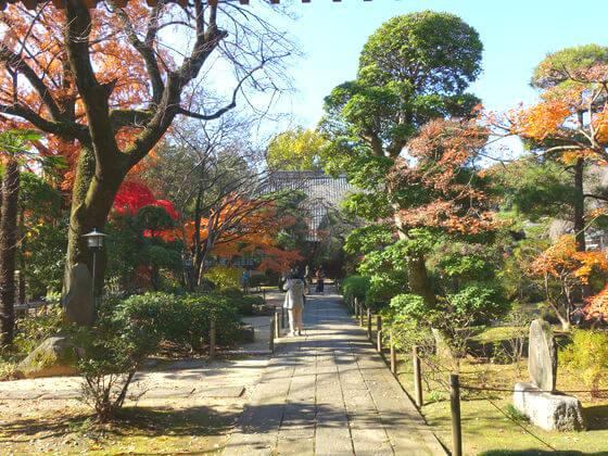 川越 中院 紅葉