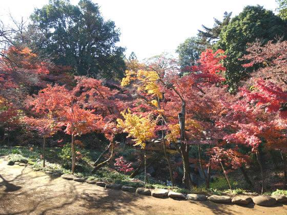 喜多院 庭園 紅葉