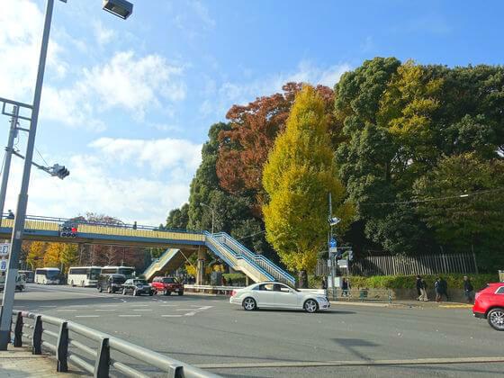 原宿 代々木公園 紅葉
