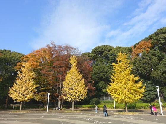 代々木公園 紅葉
