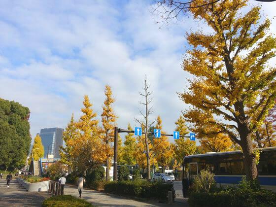 代々木公園 原宿門 銀杏