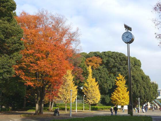 東京 代々木公園 紅葉