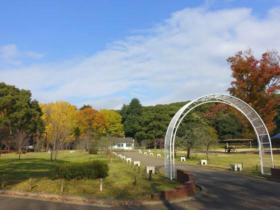 代々木公園 見本園 紅葉