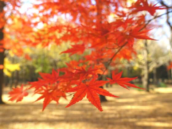 代々木公園 紅葉 見頃