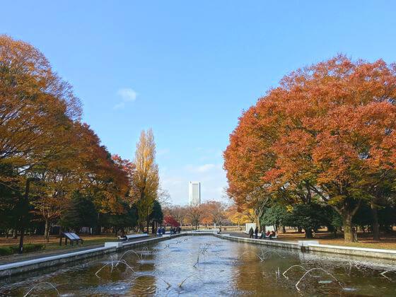 代々木公園 水回廊 紅葉