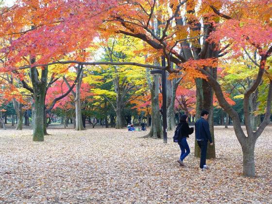 代々木公園 紅葉 状況