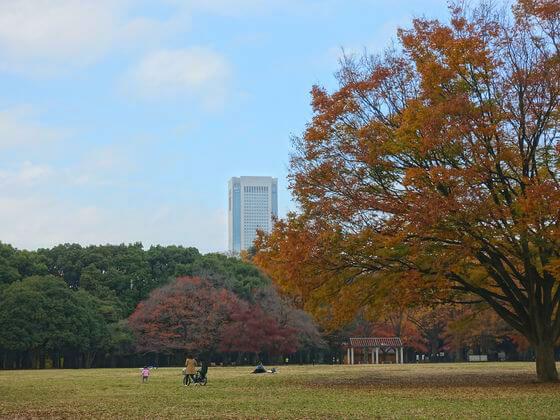 代々木公園 中央広場 紅葉