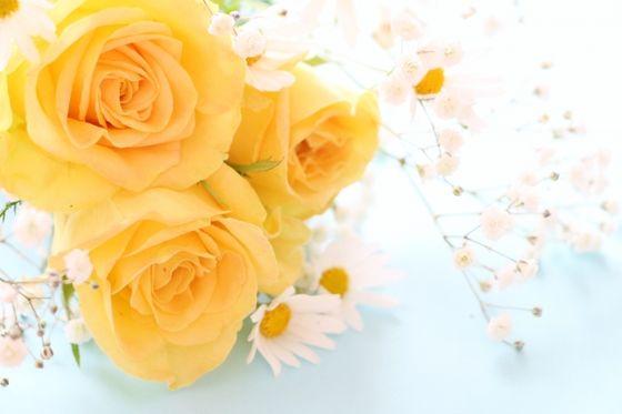 薔薇 ホルモンバランス