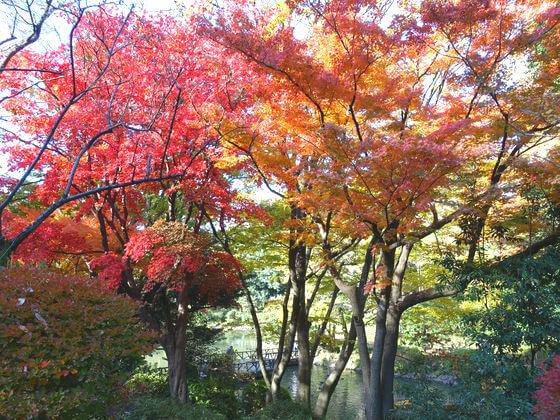 有栖川公園 紅葉 見頃